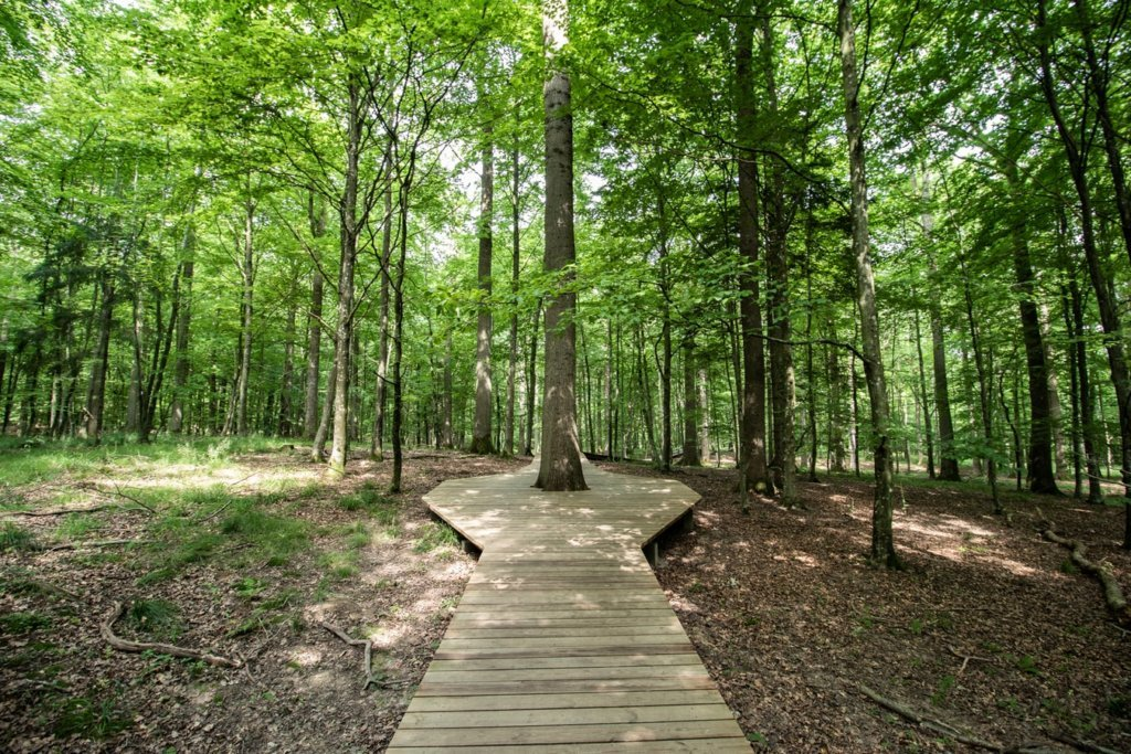 An accessible trail for wheelchairs in a forest